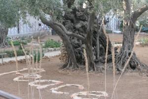 Israel 2013 Garden of Gethsemene